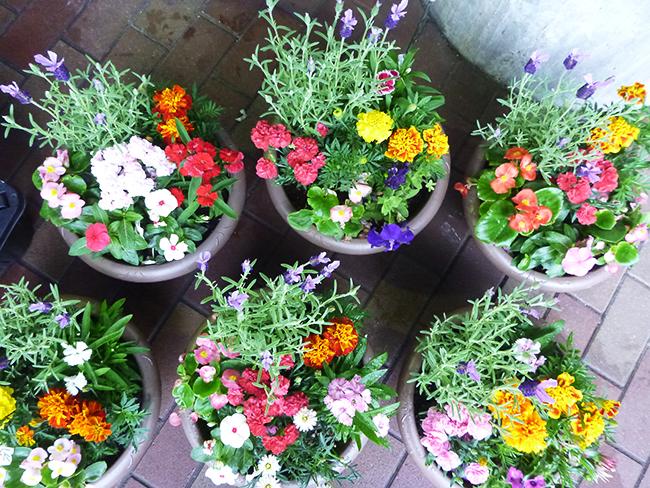 「森のお花屋さん」寄せ植え