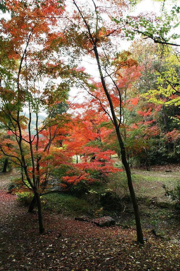 三木山森林公園 もみじ谷