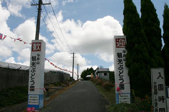 平井山観光ぶどう園1
